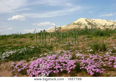 Purple Wildflowers And Butte