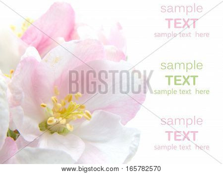 Greeting Card. Delicate Flowers On A White Background.