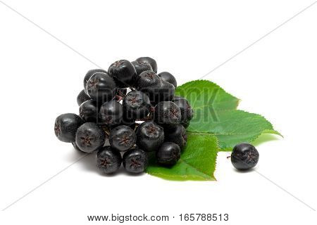 bunch of ripe berries chokeberry on a white background. horizontal photo.