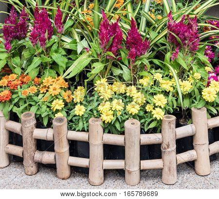 Small garden with red cokckscomb in the bamboo fence for decorate the home office.
