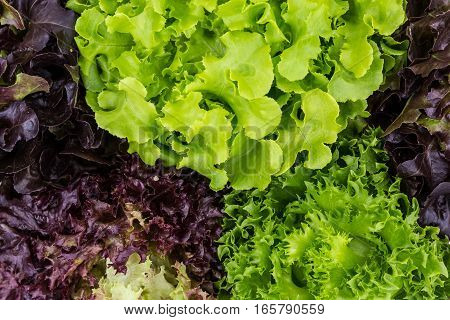 Healthy Salad leaves can use for background
