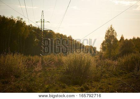 rays of setting sun cut through spruce power lines