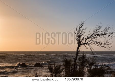 Bare Tree on Promontory: Sea and Waves