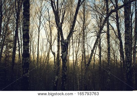Beautiful cold snowy forest in winter at sunset