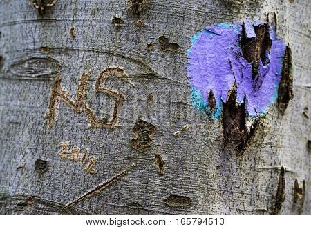 close-up of tree trunk with engraving and spray blob