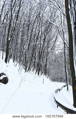 Beautiful snowy footpath or white road in winter forest wood deciduous trees and snow in mountains on wintertime outdoors on natural background