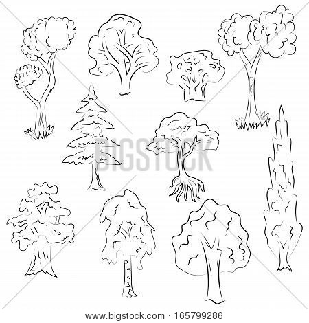 Hand Drawn Set of Trees. Doodle Drawings of Fir Cypress Birch Oak in Sketch Style. Vector Illustration.