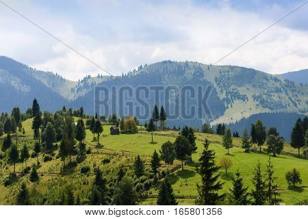 Mountain landscape in bucovina with green fields, pines and a small house, romania