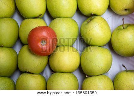 Fresh red tomato fruit resting on green fresh apple fruits.