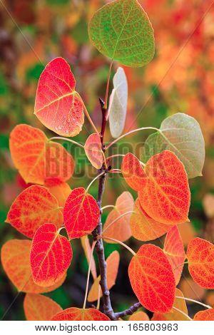Various Fall foliage in its natural setting