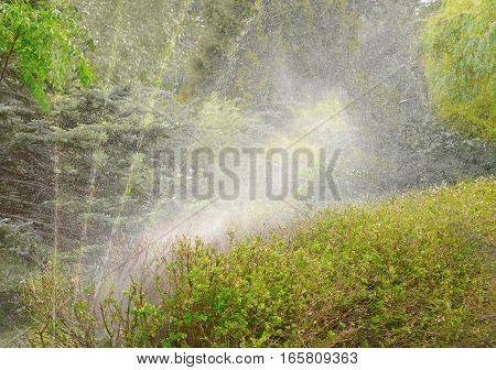 automatic watering of green vegetation in the summer