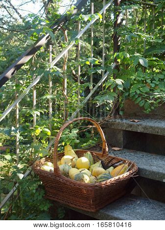 Wicker basket with small pumpkins on the steps