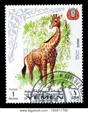 YEMEN - CIRCA 1969 : Cancelled postage stamp printed by Yemen, that shows Giraffe.