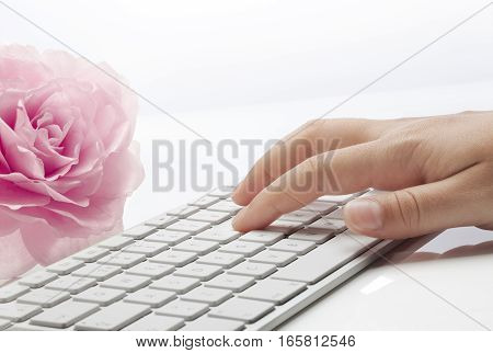 Young woman's hand typing on a keyboard and a pink rose against white background.