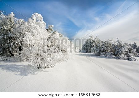 Winter landscape with trees in snow, snow-covered forest and blue sky with white clouds in the cold winter, the trees covered with snow and hoarfrost on a sunny day, white clouds and snow-covered road
