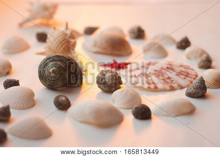 Sea song at sunset. yellow, red star. pattern of seashells on white background