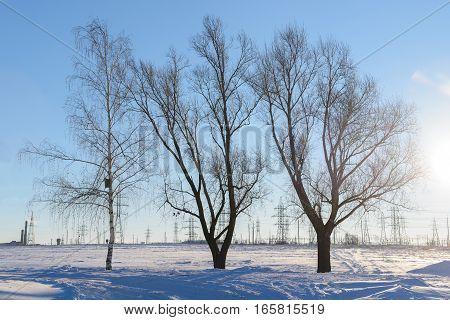 three deciduous tree on snowy field day