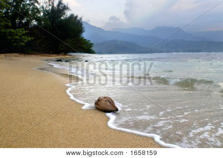 Coconut Washed Ashore