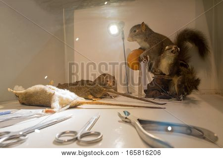 Lab rats and medical devices in glass Rats staff