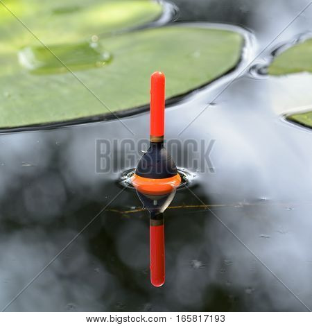 Fishing float in the pond among lily leaves. Angling tackle with a bobber