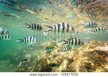 School Of Fish And Coral Reef In Kenya