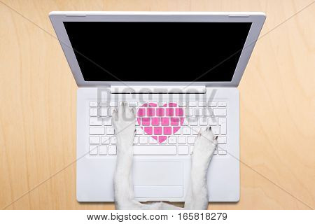 Valentines Day Dog, Dating Online On A Chat