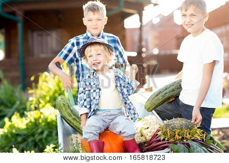 Children working in garden. Kids brothers harvesting in autumn