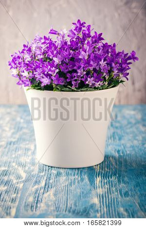 Bright Planter With Purple Bluebells On Blue Board