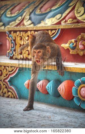 Monkeys In Pashupatinath