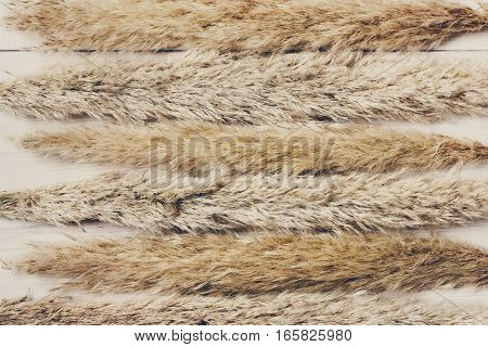 Dried white fluffy cattail or typha flower texture background, top view on white wood. Absract floral composition