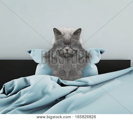 Cute british cat wake up after sleeping