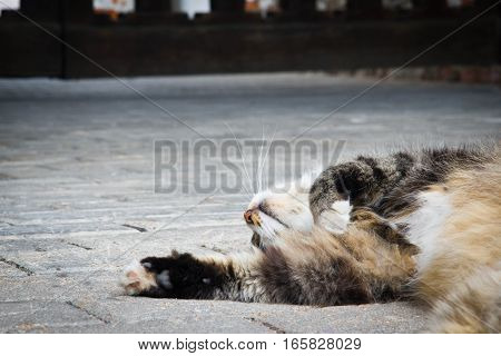 Cat Sleeps On A Path In The Park