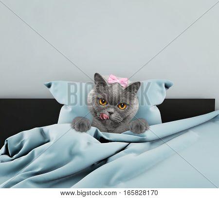 Little cute cat sleeping in a bed