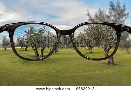 Clear vision through glasses over trees field