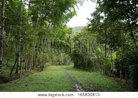 muddy path through the highland jungle in Tierradentro Colombia