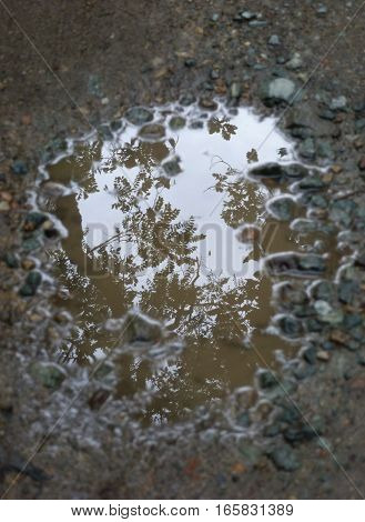Picture of a puddle of water reflecting its surroundings