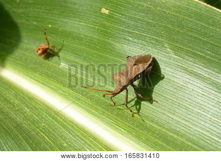 Picture of two little bugs standing on a leaf