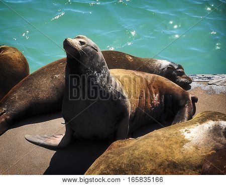 This is a photo of a sea lion.