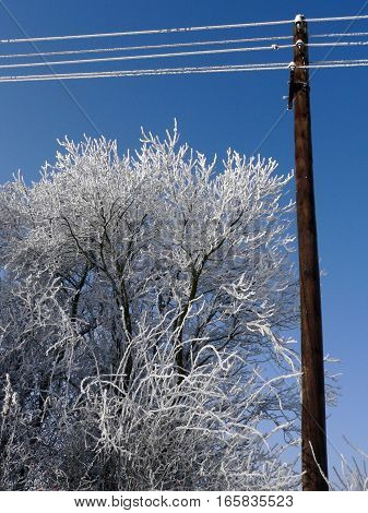 the frozen branches of trees next to electric power in the Czech Republic