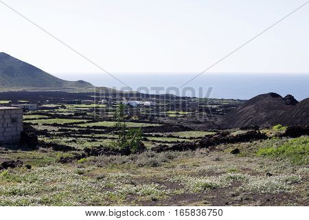 The island of Lanzarote has never been so green