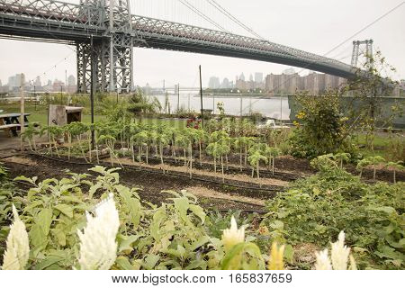 A garden is weel maintained on a parcell of land by the Williamsburg Bridge in New York City