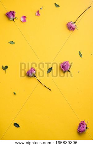 Dried pink small roses on yellow background