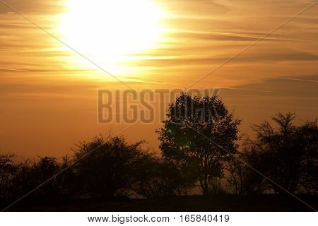 Image of the autumn sunset with soliraty tree