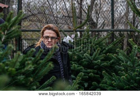 Bucharest Romania December 20 2013: A woman is looking at natural Christmas trees in a Christmas tree market in Bucharest.