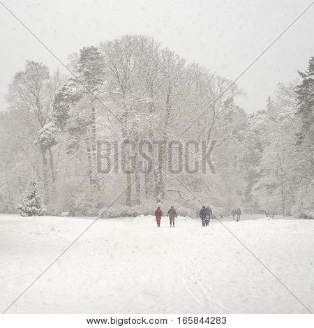 Heavy snowfall in a park, cold winter