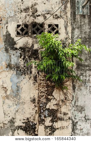 Small tree growing on wall in Geroge Town, Penang