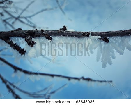 Winter natural background with cherry tree branches in the frost. Layer of snow and hoar on the wood.