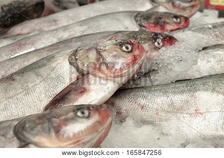 Silver carp frozen in the ice of a group of a few fish at a supermarket store in the refrigerator