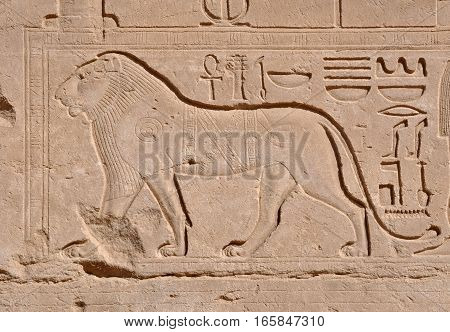 Bas-relief of a lion on the wall of Karnak Temple in Egypt.