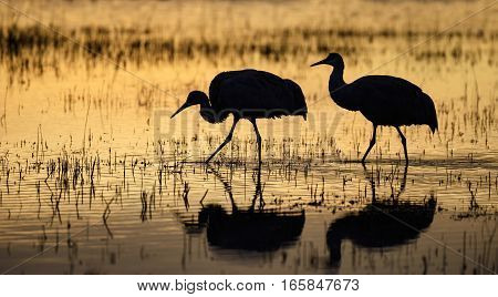 Silhouette of Two Sandhill Cranes at Sunrise